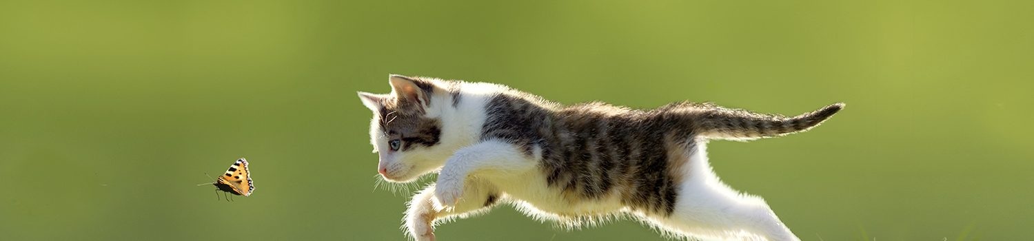 Little cat leaping after butterfly