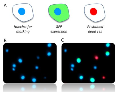 Cell staining in NucleoView™