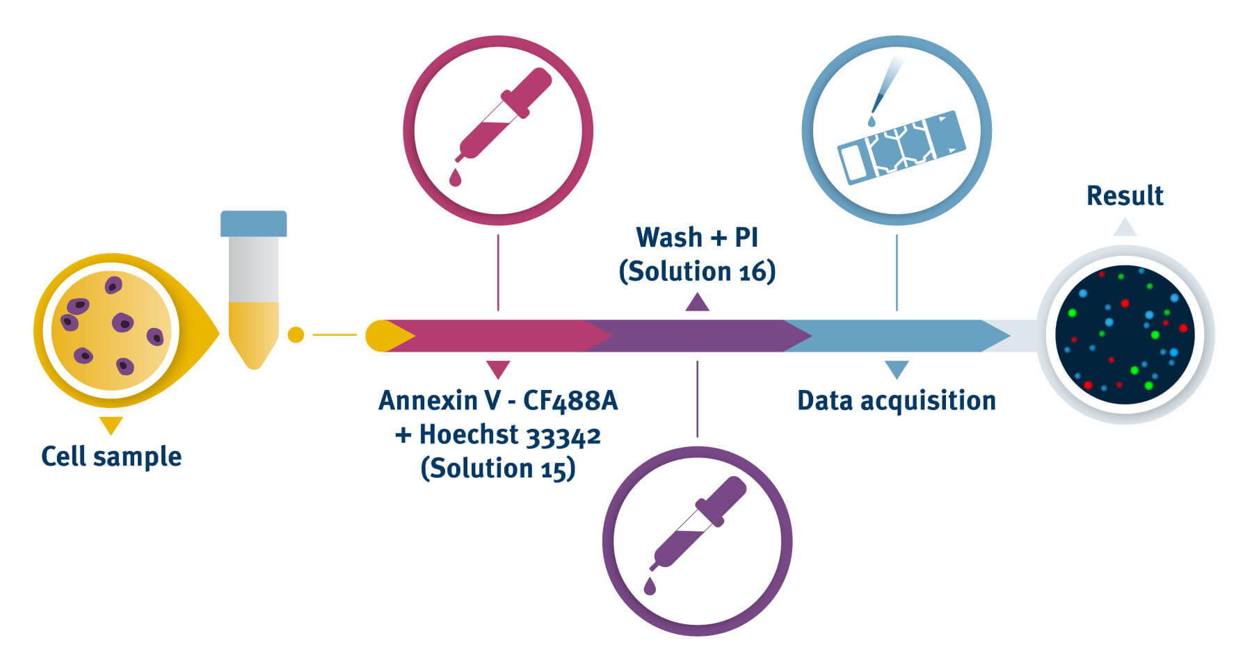 Annexin V Assay process with the NucleoCounter®