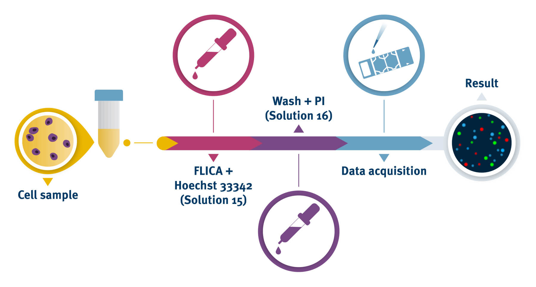 Caspase Assay process with the NucleoCounter®