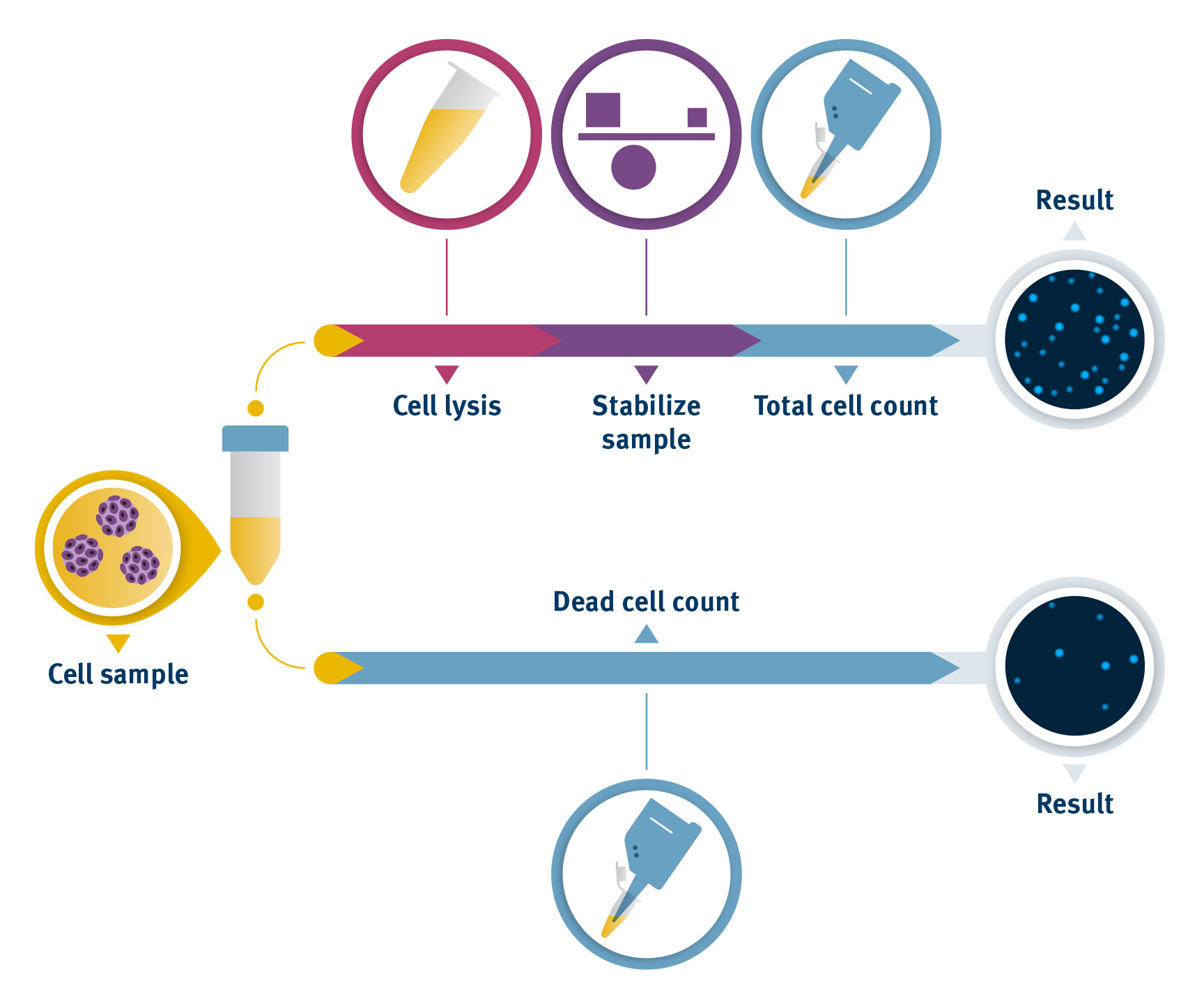 Microcarrier Assay workflow using the NucleoCounter® NC-202™