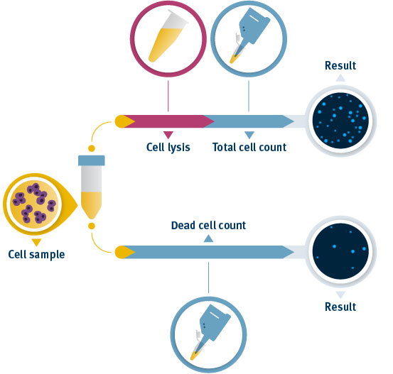 Viability and cell count of aggregated cells