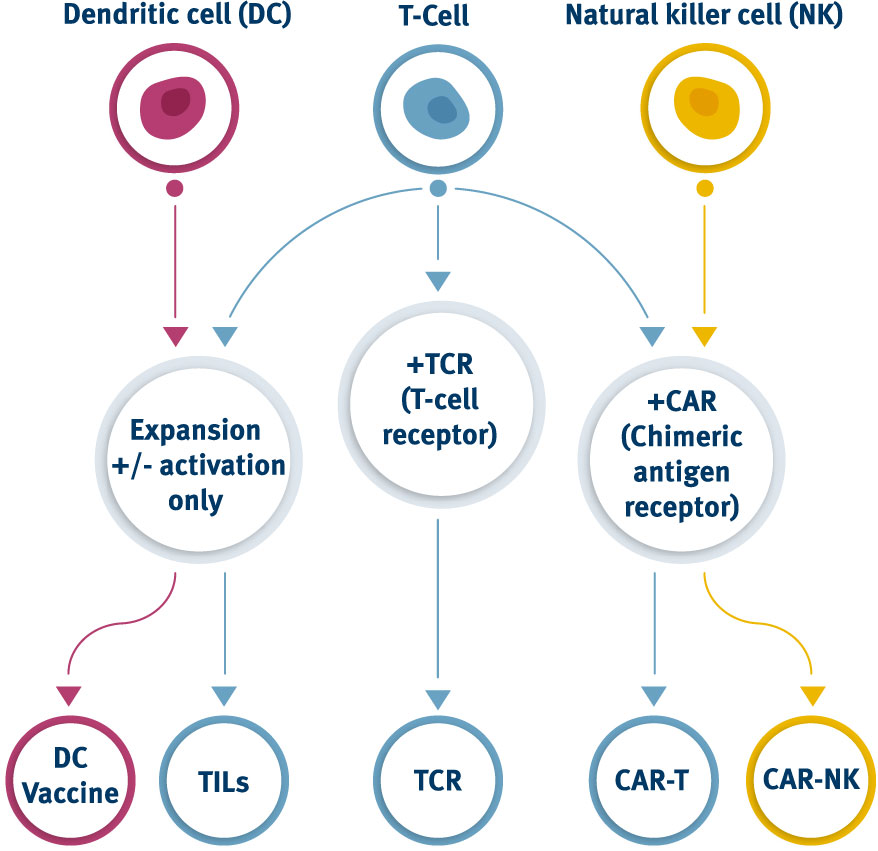 Dendritic Cells, T-cells and NK Cells in cell-based immunotherapy