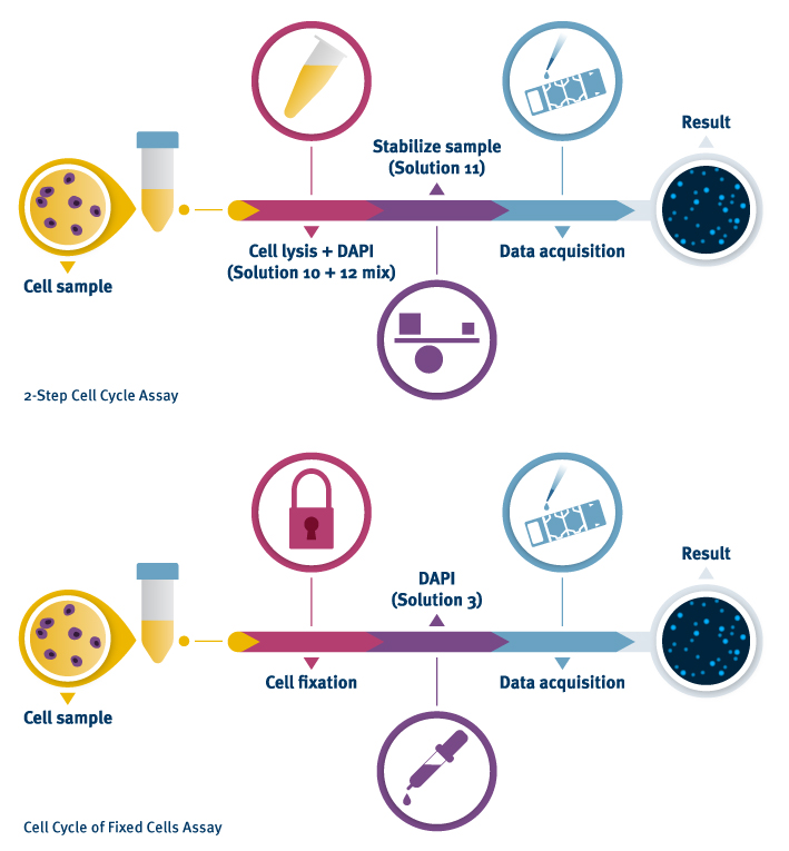 Cell Cycle Assay 2-Step Process