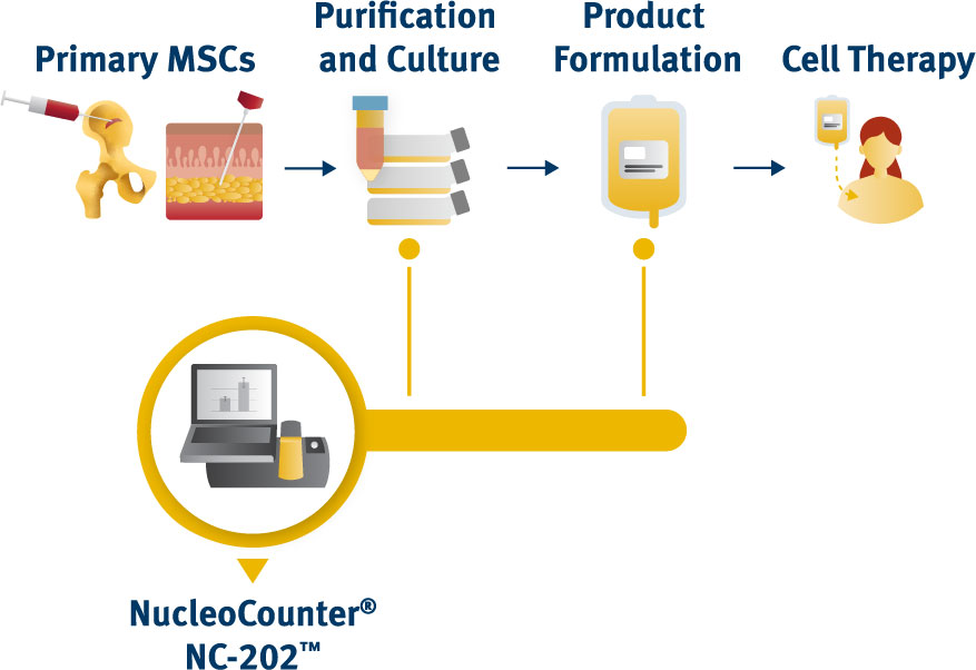 Using mesenchymal stem cells (MSCs) for stem cell therapy