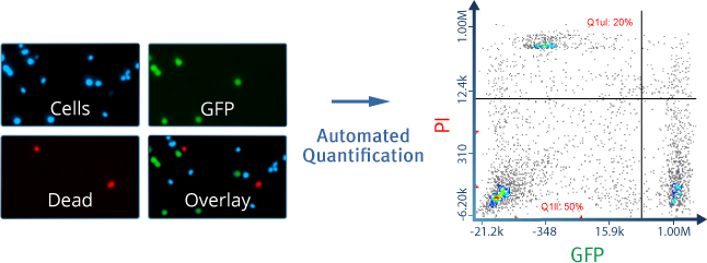 Data from GFP Transfection Efficiency Assay with NC-3000™